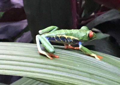 Bellezas de Costa Rica, tomadas por Carlos Cordero